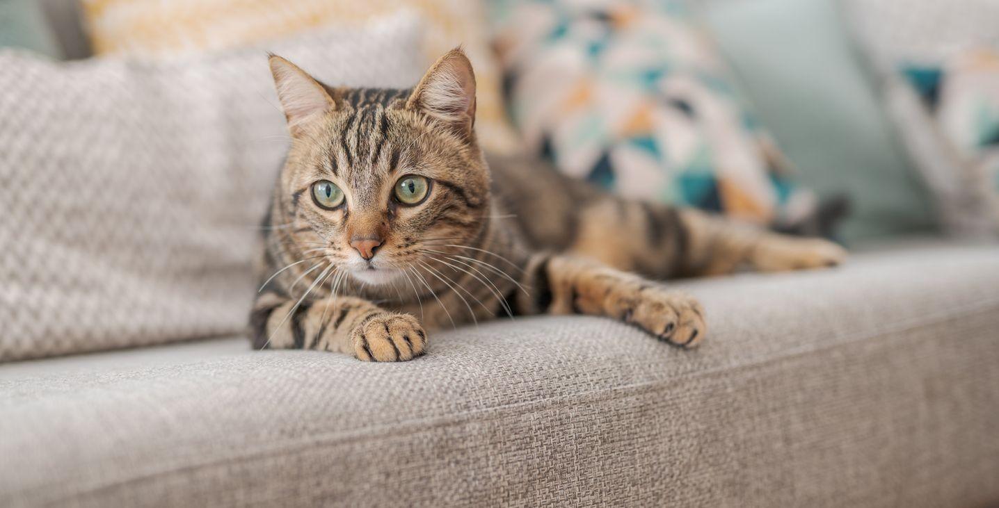 Comment protéger mon canapé de mon chat ?